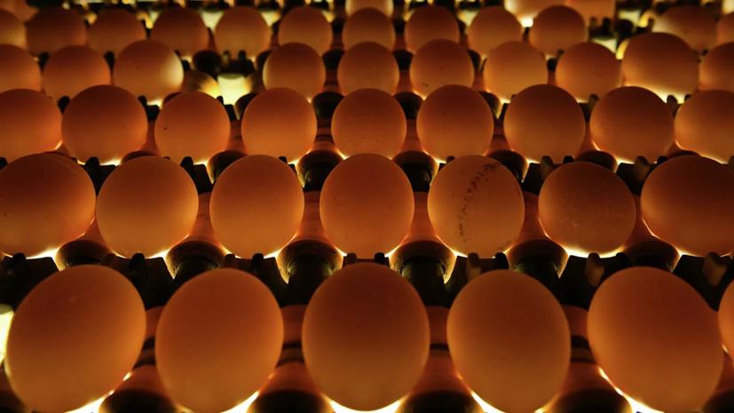 В Роспотребнадзоре дали советы по покупке яиц к Пасхе