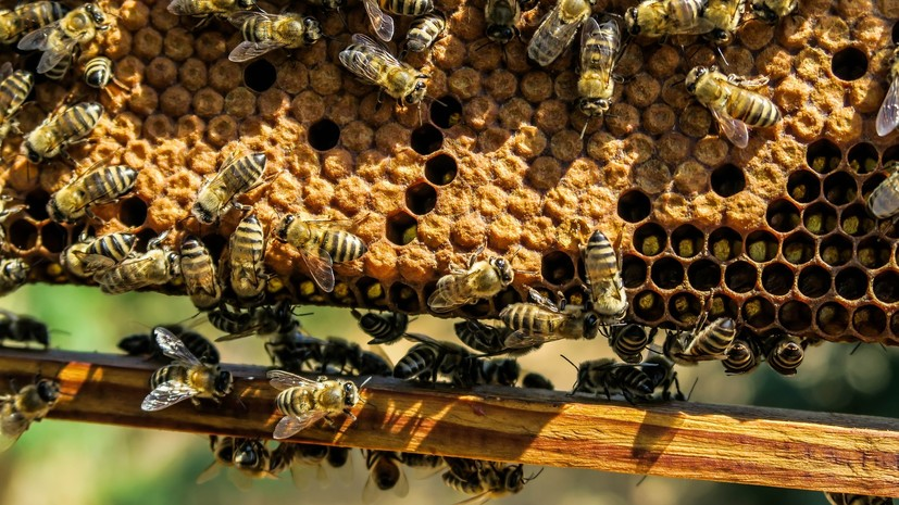 В Ростовской области задержана группа украинцев за контрабанду ульев с пчёлами