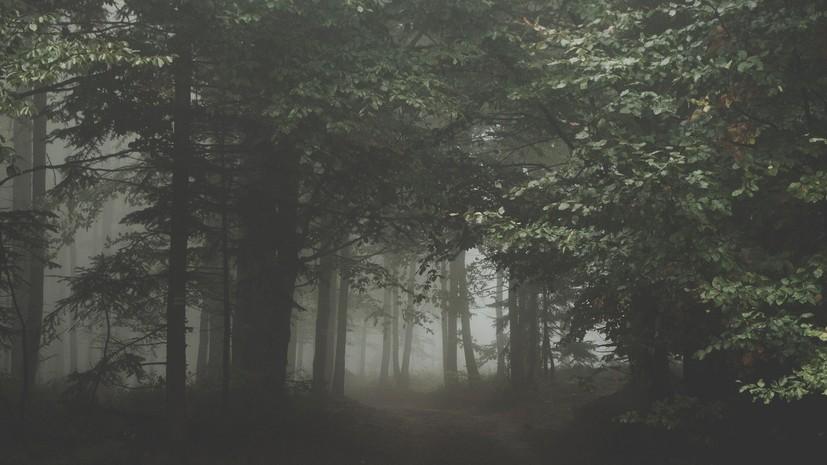 Эксперт оценил ситуацию с поиском без вести пропавших в природной среде.