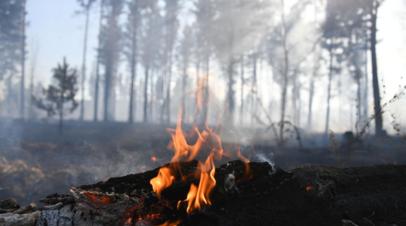 Особый противопожарный режим введут в Самарской области с 15 апреля
