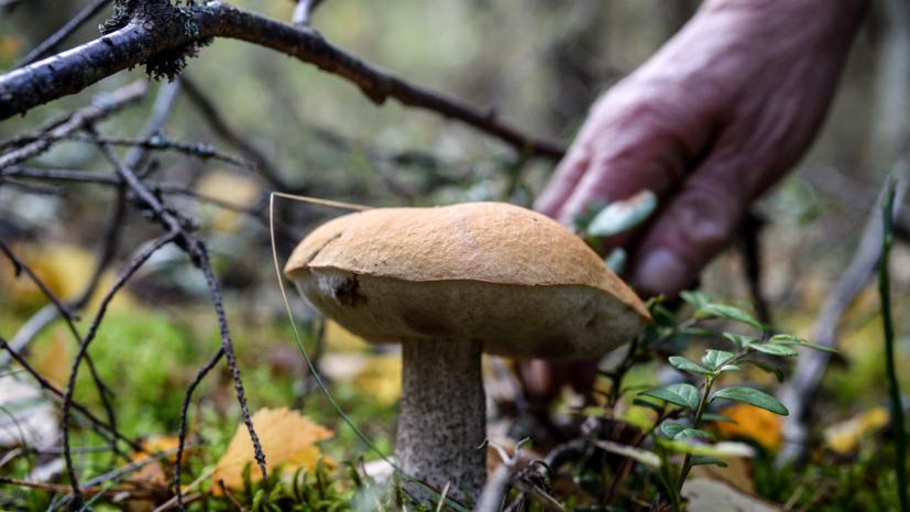 В Минприроды отреагировали на сообщения об ужесточении правил сбора грибов