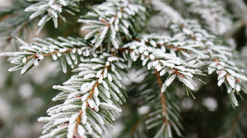 Синоптики предупредили о заморозках в Подмосковье