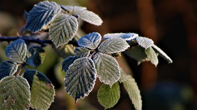 В Оренбургской области предупредили о заморозках в ночь на 13 мая