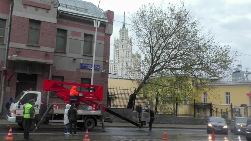 Ветер повалил в Москве 20 деревьев и повредил 12 автомобилей