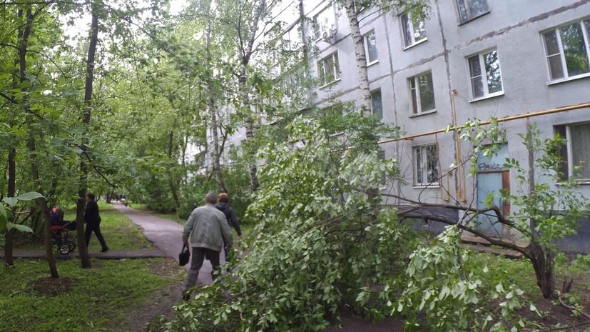 В Москве ветер за сутки повалил почти 60 деревьев
