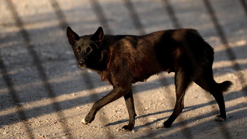 В Ленинградской области возбудили дело по факту нападения собаки на ребёнка