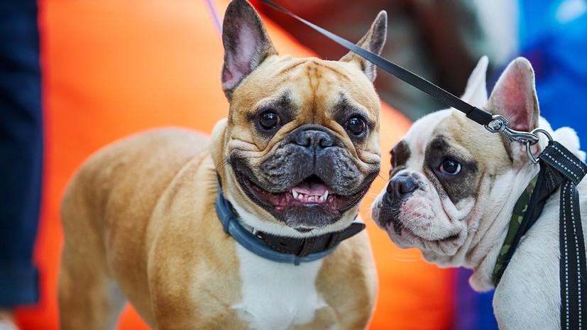 Ветеринары дали советы по рациону домашних животных