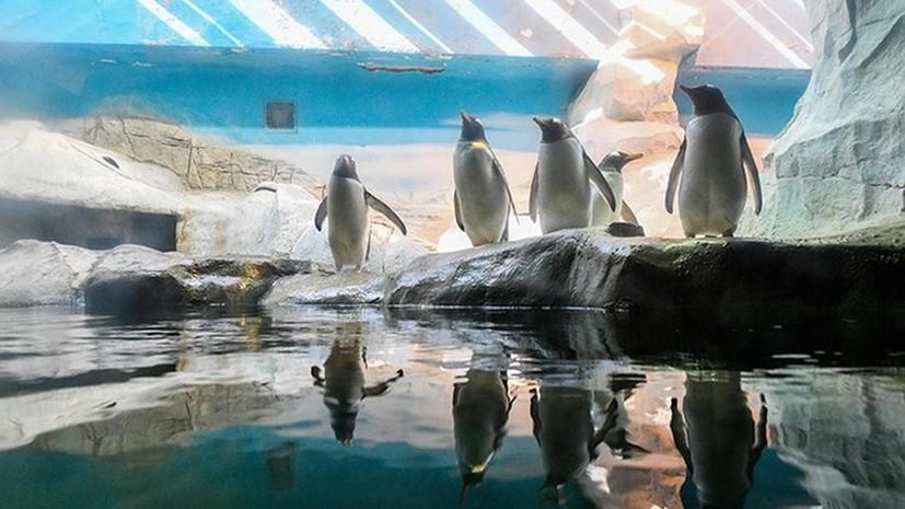 Шесть пингвинов из Московского зоопарка отправили в Северную Македонию