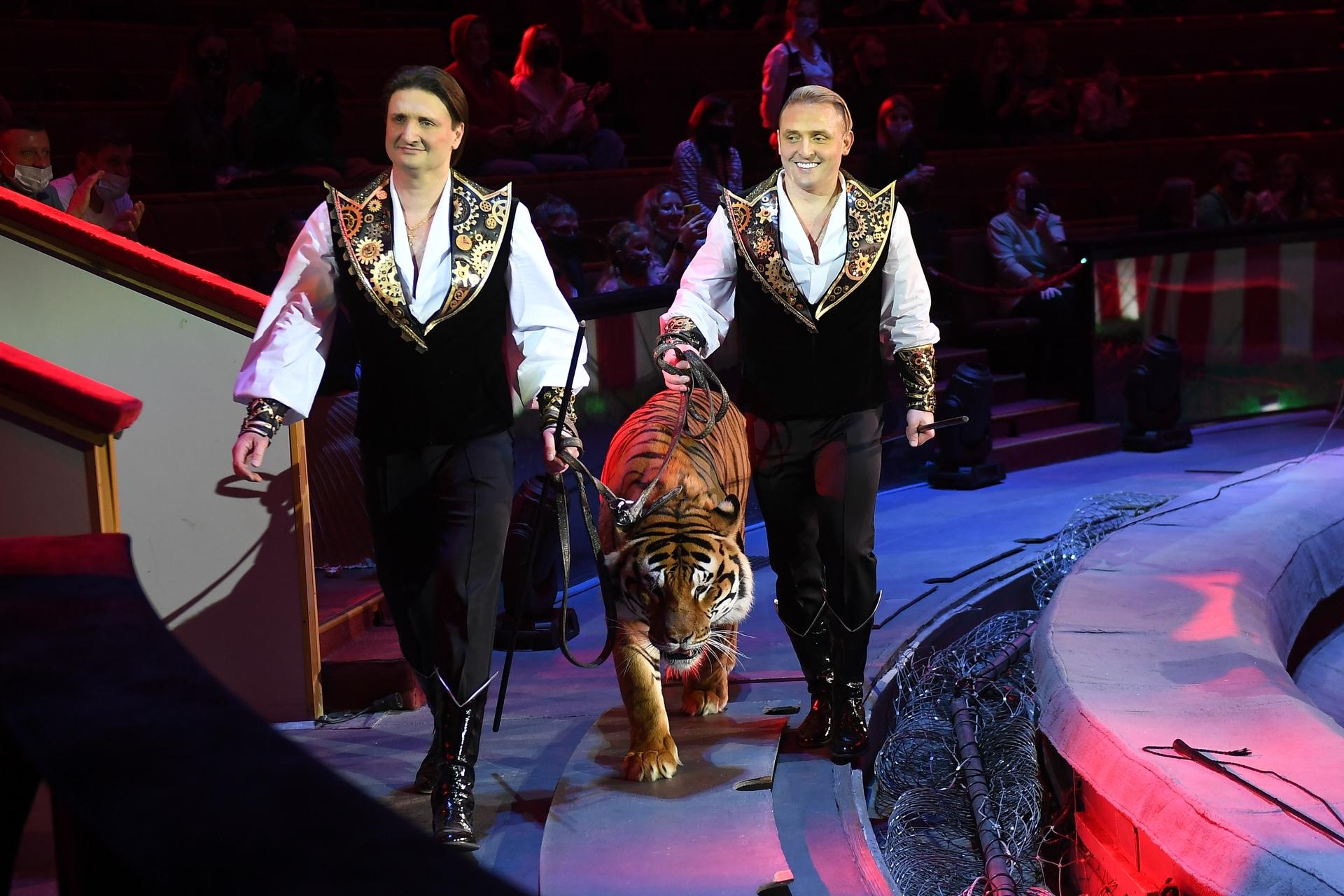 «Дрессура не несёт в себе негатива как понятие»: Эдгард Запашный — о цирке без животных и воспитании тигров и детей1