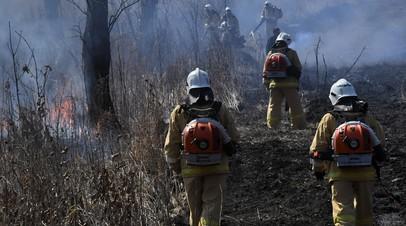 В России за сутки потушили 136 лесных пожаров