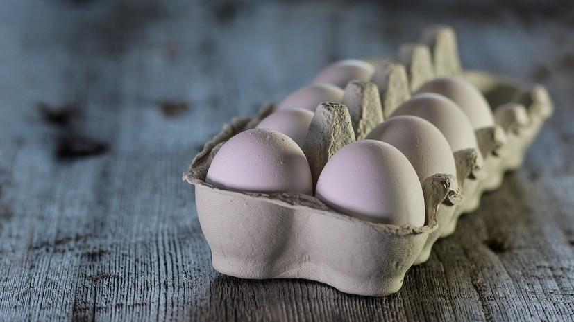 Глава Россельхознадзора напомнил, что в России нет дефицита пищевого яйца