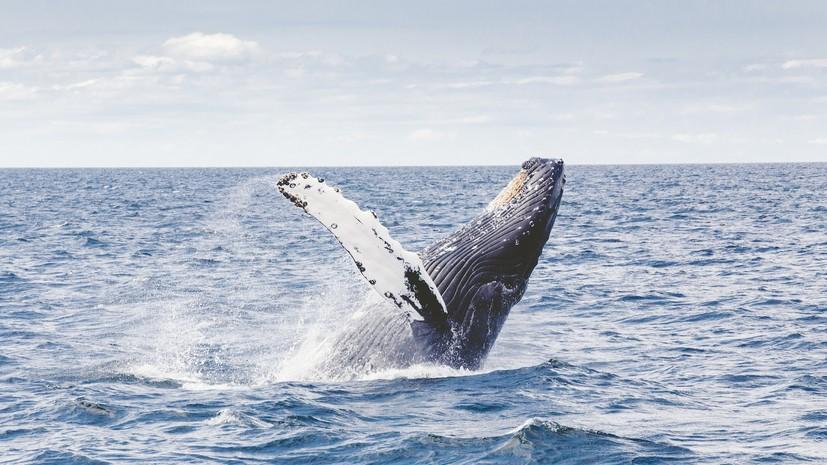 В Австралии подросток впал в кому после столкновения кита с его лодкой