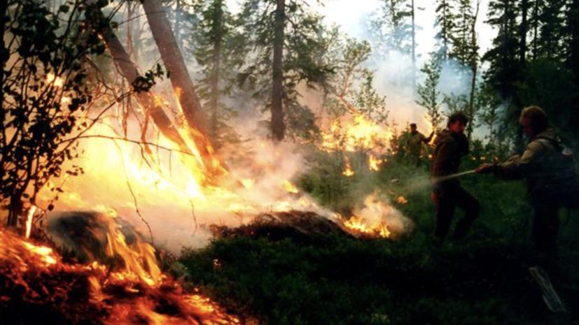 В России за сутки потушили 106 лесных пожаров