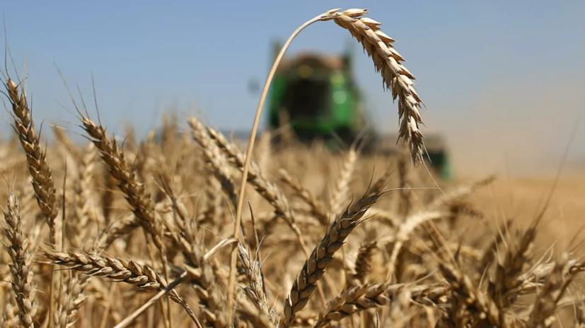 Минсельхоз высказался о влиянии жары на урожай зерновых