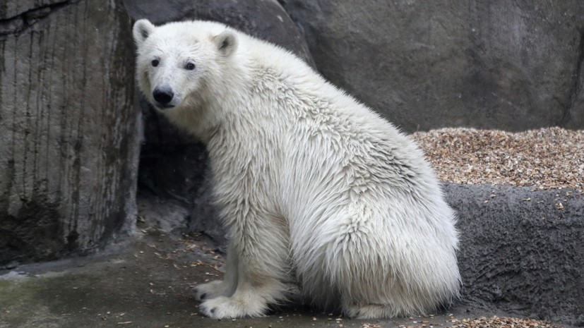 В Московском зоопарке рассказали, как животные борются с жарой