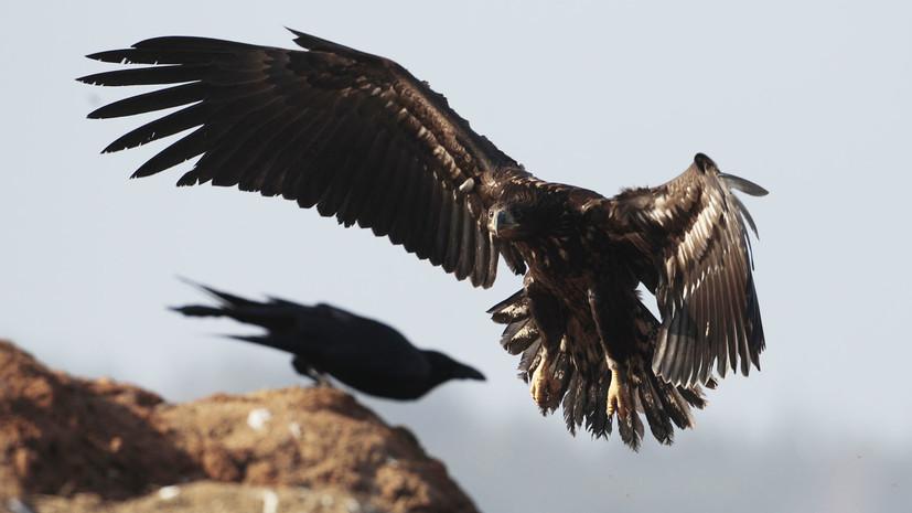 Крылатые и пернатые: тест RT о птицах России