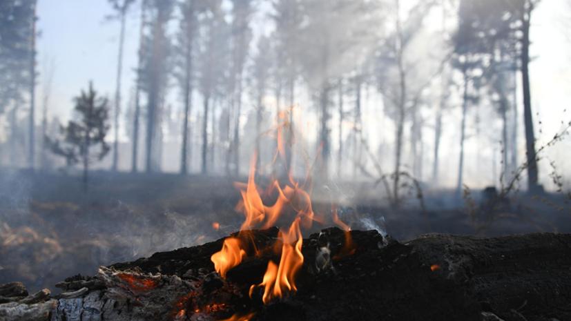 В Подмосковье пожар охватил 7 гектаров леса