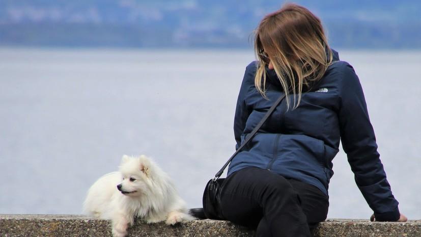 В Госдуме объяснили необходимость введения штрафов за жестокое обращение с животными