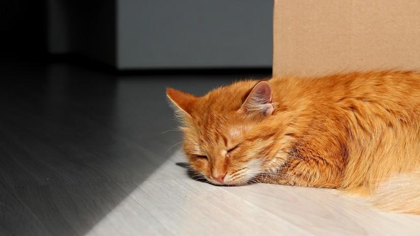 Ветеринар рассказал о домашних животных, для которых опасна жара