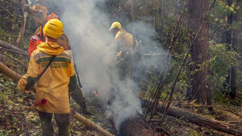 В России за сутки ликвидировали 96 лесных пожаров