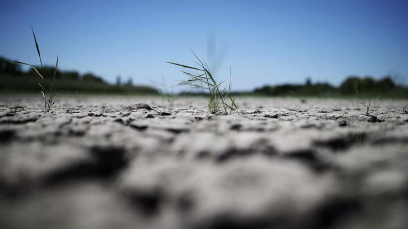 Синоптик предупредил о засухе в Центральной России