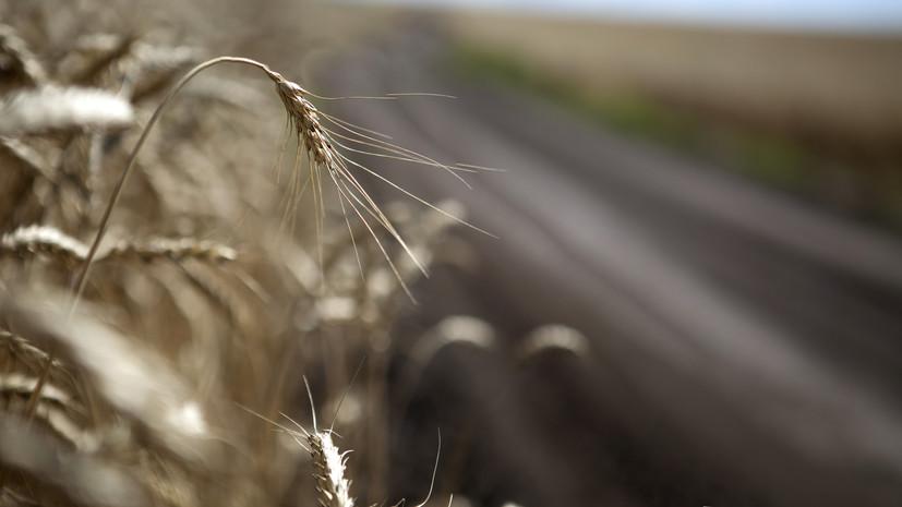 В Российском зерновом союзе оценили возможное влияние жары на урожай
