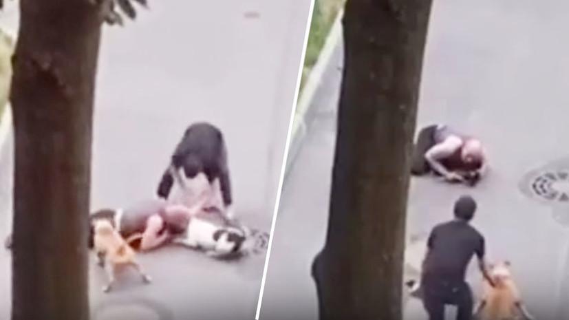 «Накрыл собой»: петербуржец пострадал, спасая собаку от агрессивных псов0