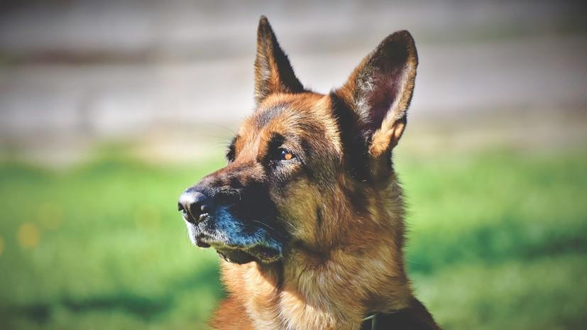 Холдинг «Технодинамика» провёл испытания парашютной системы для собак
