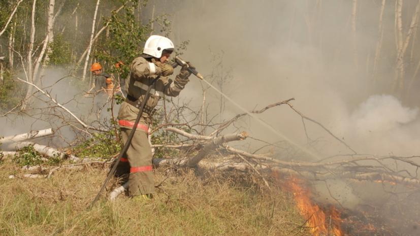 В России за сутки ликвидировали 122 лесных пожара