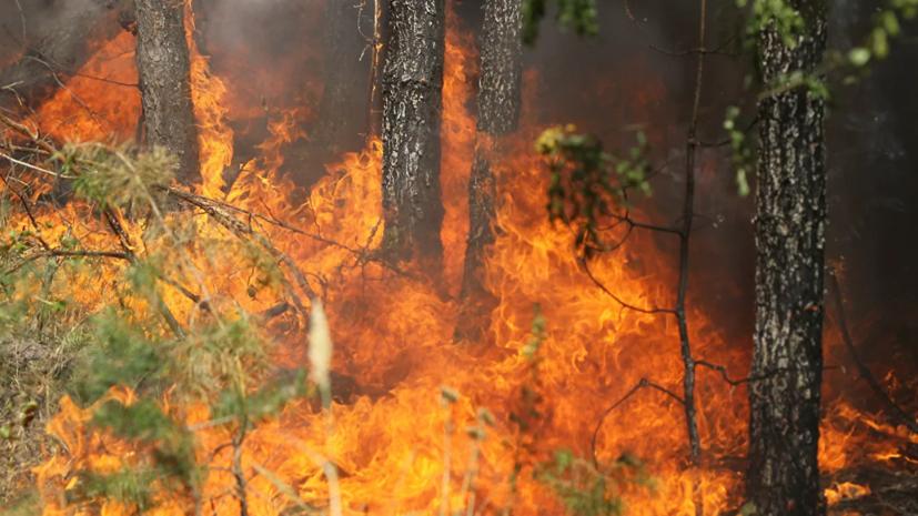 В Иркутской области горит лес на площади 10 тысяч гектаров