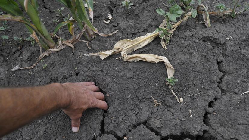 Ещё в 12 муниципалитетах Оренбургской области введён режим ЧС из-за засухи