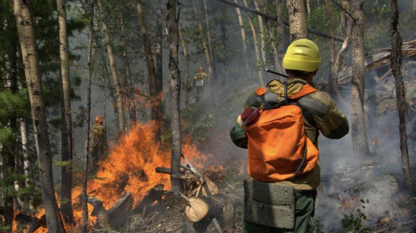 За сутки в России ликвидировано 106 лесных пожаров