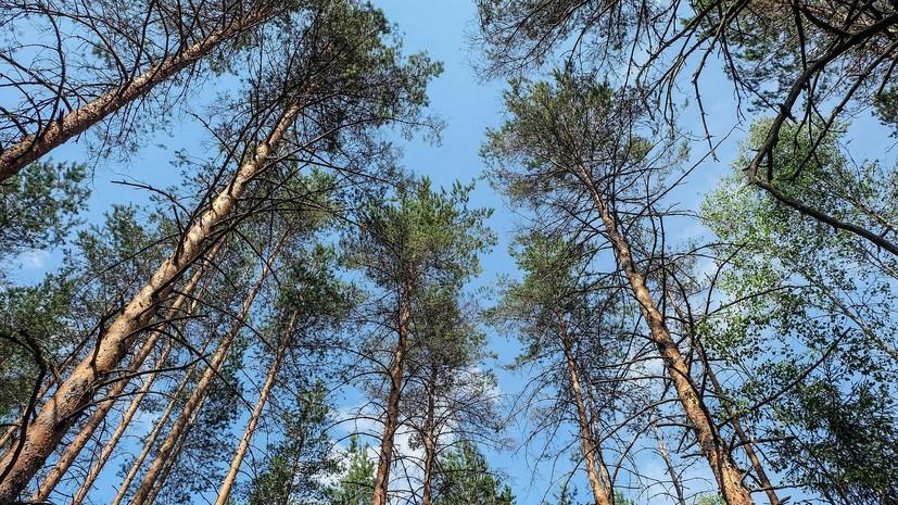 На Кубани запрет на посещение лесов будет действовать до 6 августа