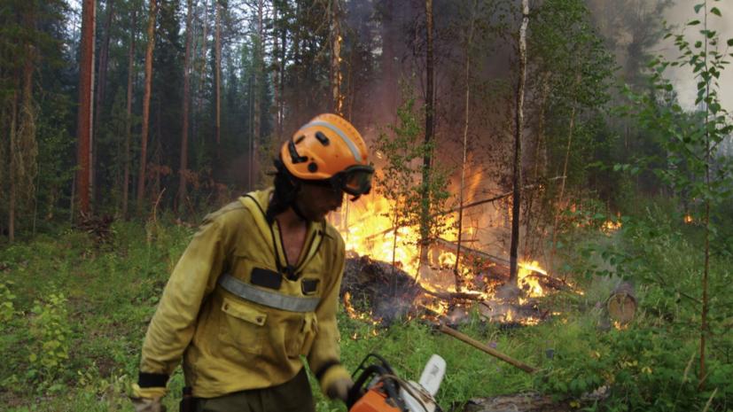 В России за сутки ликвидировали 59 лесных пожаров
