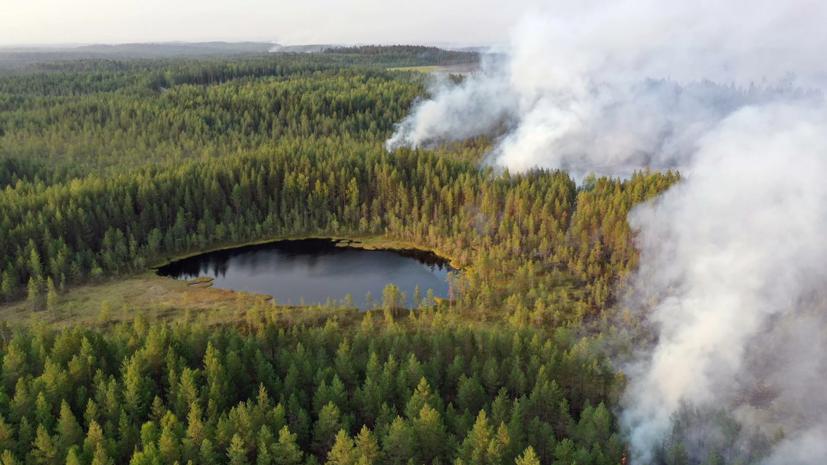 В Карелии рассказали о ситуации с природными пожарам
