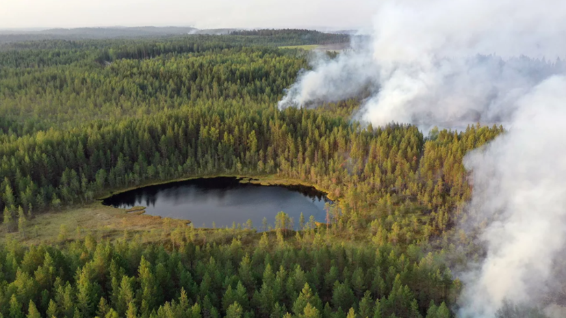 В Минприроды рассказали о ситуации с лесными пожарами
