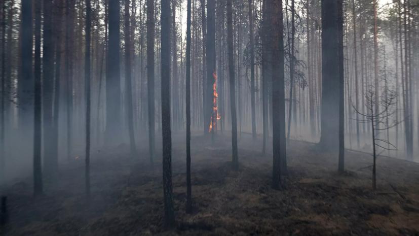 Площадь лесных пожаров в Карелии возросла до 15 000 га