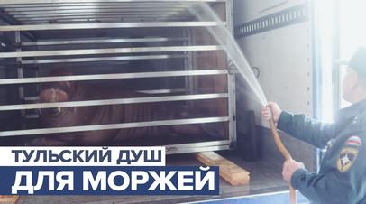 Освежающий душ для моржей: как тульские пожарные спасли ластоногих от жары
