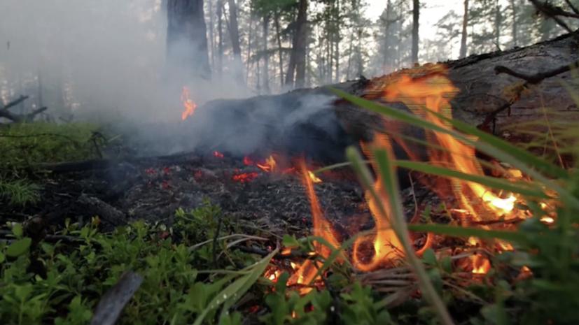 Рослесхоз поручил нарастить группировки для тушения пожаров в трёх регионах