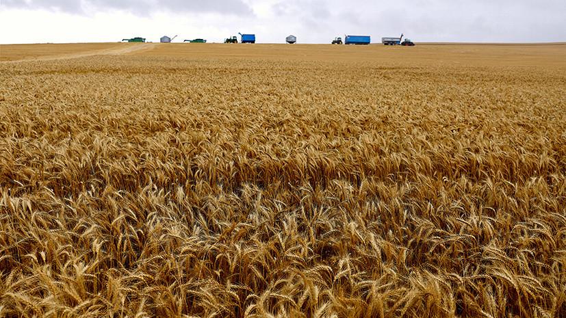 Минсельхоз сообщил о снижении экспорта зерна в июле