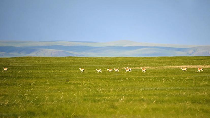 Кабмин расширил границы заповедника «Даурский» в Забайкальском крае