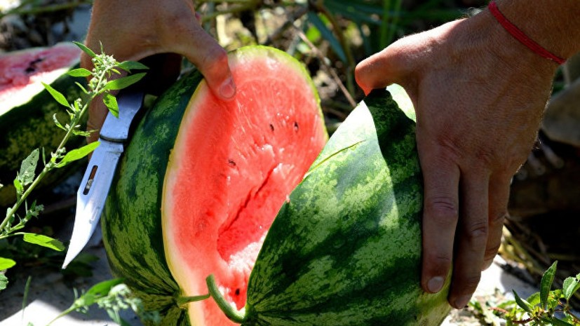 Эксперт по бахчевым культурам рассказал, безопасны ли ранние арбузы
