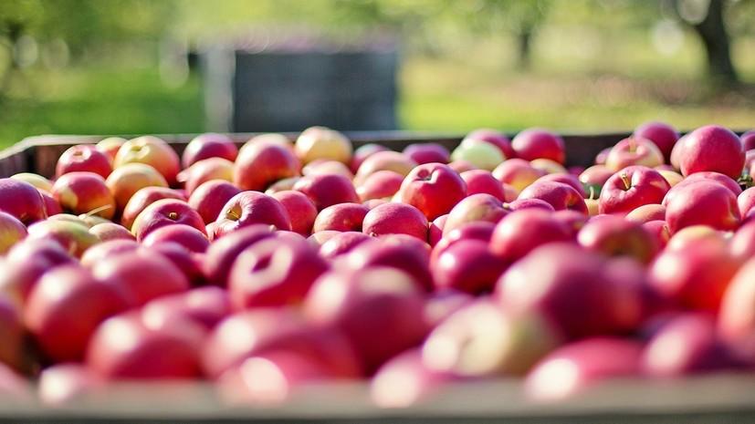 Ряду азербайджанских предприятий разрешили поставлять яблоки в Россию