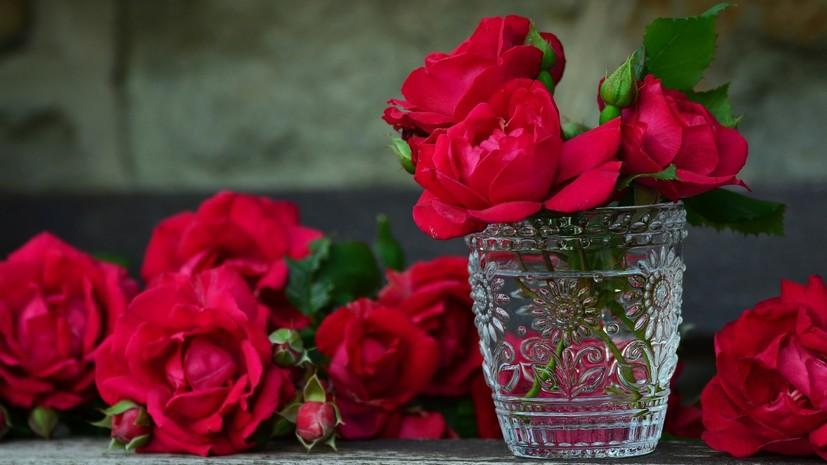 В России предложили заморозить цены на цветы перед 1 сентября