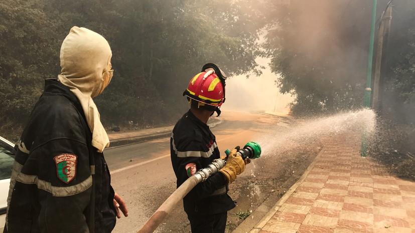 Число погибших в результате пожаров в Алжире возросло до 65