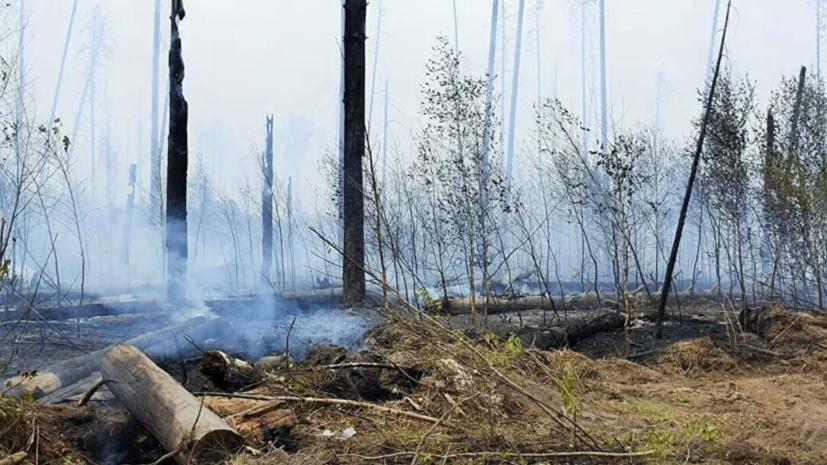 В МЧС рассказали о ходе тушения пожара в заповеднике Мордовии