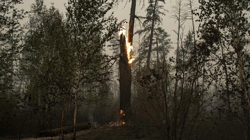 Глава Рослесхоза рассказал о ситуации с лесными пожарами в Якутии