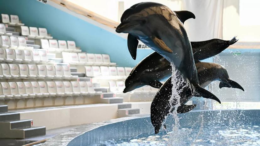 В России на полгода ввели запрет на вывоз ряда морских млекопитающих