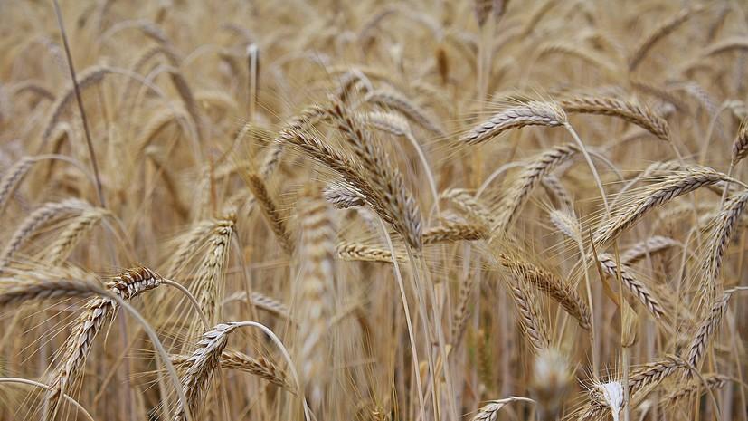 В Белоруссии ввели запрет на вывоз некоторых видов зерна