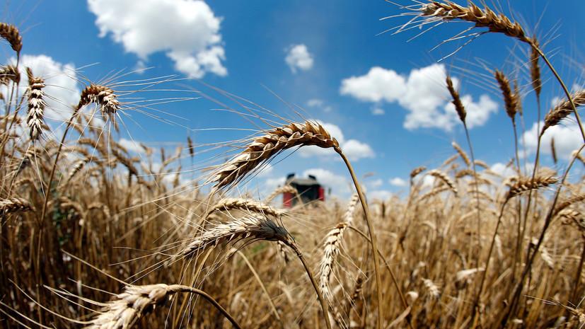 Кабмин дополнил перечень получателей поддержки в рамках госпрограммы развития сельского хозяйства